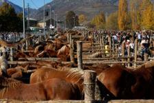 Feria del Caballo Hispano-Bretón